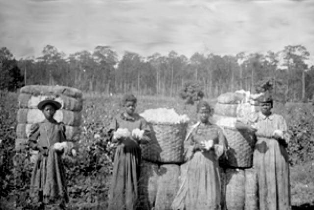 Slavery in US: How Black Women Resisted Slave Breeding By Using Cotton roots as Contraceptives