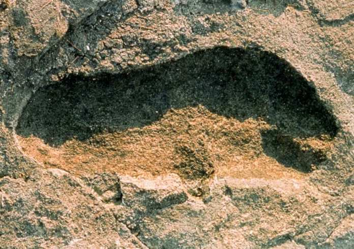 The Largest Collection of Ancient Footprints in Africa Has Been Discovered in Tanzania