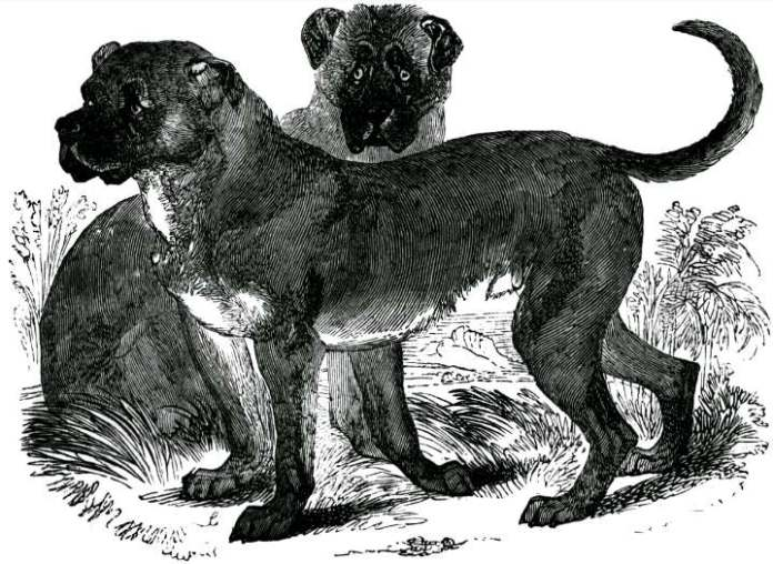 Negro Dogs: How Vicious Dogs Were Used To Track, Attack, And Capture Runaway Slaves