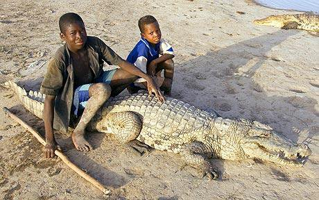 Bazoule Where Crocodiles and Humans Live Side by Side in Peace