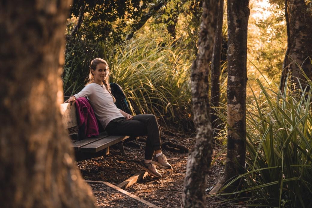 Coromandel kauri Thames walk forest