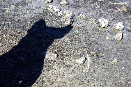 Bubba's bug shadow