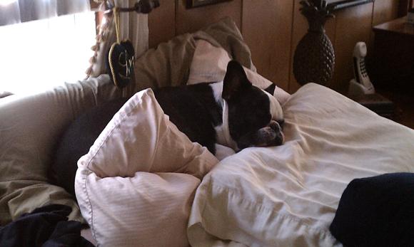 bubba snoozing