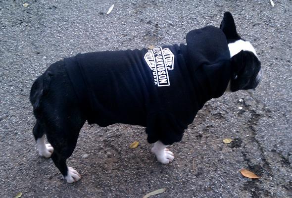 bubba in sweatshirt