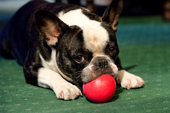 Bubba Playing Ball