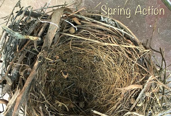 Spring Fun