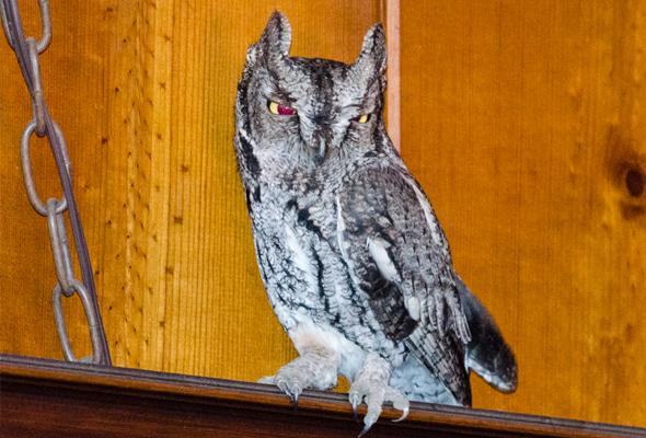 owlmain