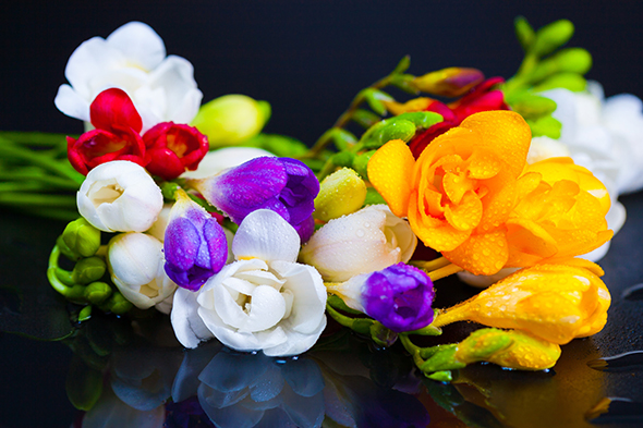 bouquet  flowers freesia
