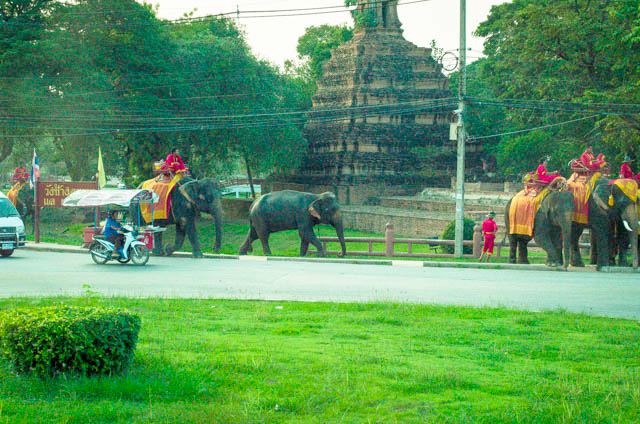 Elephants on roadway