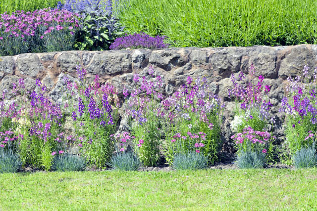 Cottage stone wall with vibrant bright flowers in bloom in front of green grass