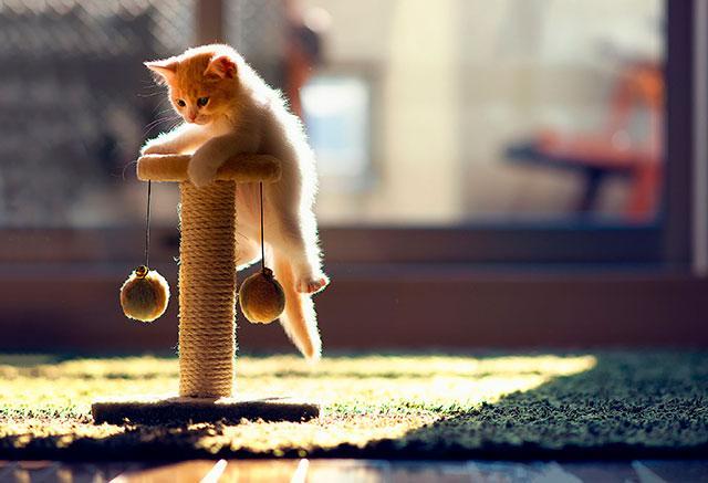 Krassen voor kitten