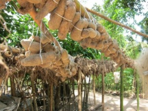 Igbos traditionally use passive means to keep yams at low temperature in an oba.