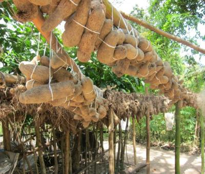Igbos traditionally use passive means to keep yams at low temperature in an oba. Photo: Anam City Blog