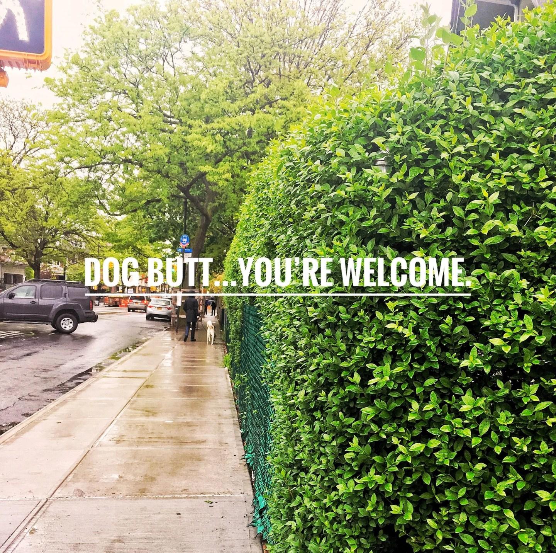 Ditmas Park, Brooklyn