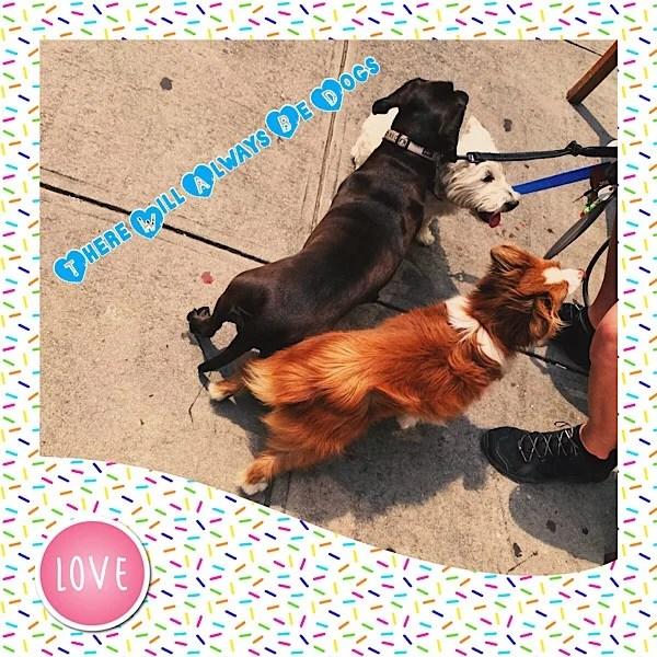 Dogs scene in Brooklyn Heights