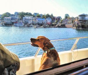 A dog on our whale watching cruise in Boothbay Harbor, Maine