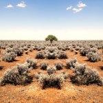 Die besten Bücher aus und über Australien