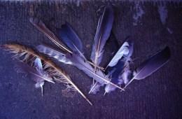 Titelbild für Birdz Folge 4