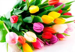 Букет тюльпанов.png