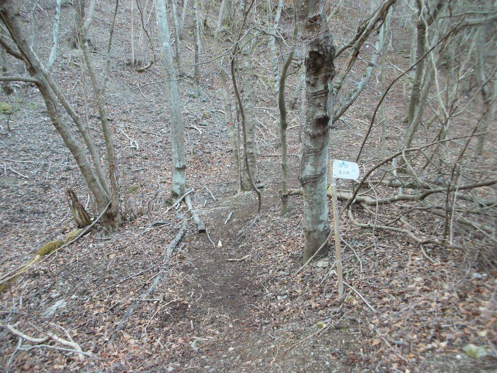 林道終点から登山口
