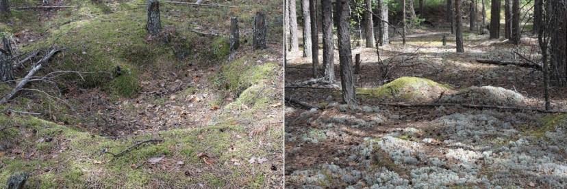 Заключенных в Устьвымлаге чаще хоронили в общих круглых ямах. На месте индивидуальных захоронений остались лишь небольшие холмы