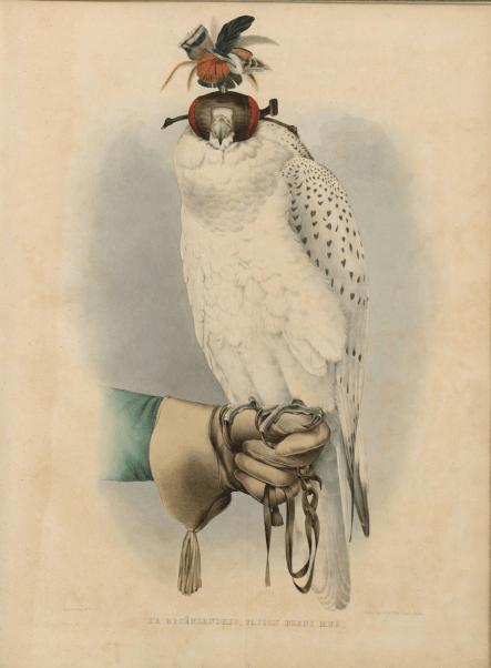 Белый сокол - гравюра