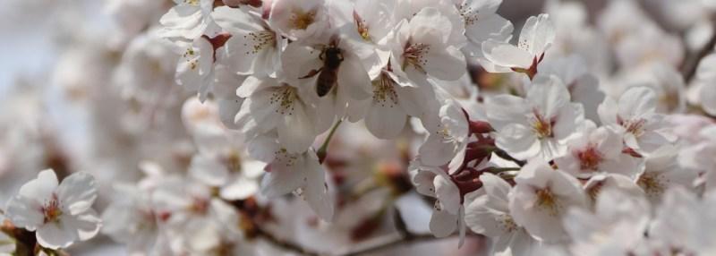 Fleurs coréennes layering coréen blog article 2