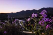 Albania Permet Sunset Flowers