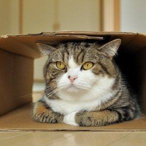 MARU - THE CUTEST CAT IN TOKYO