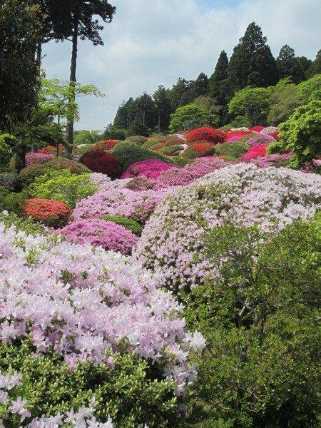 flowers japan 31