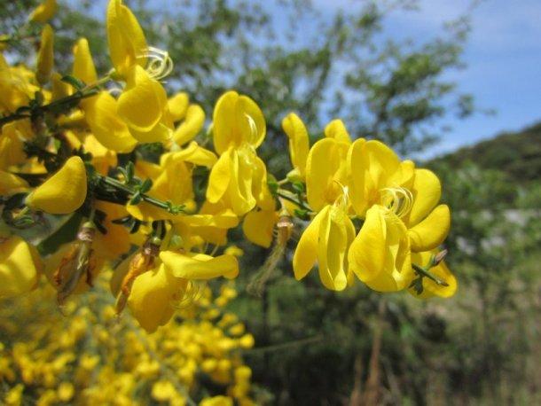 flowers japan 47