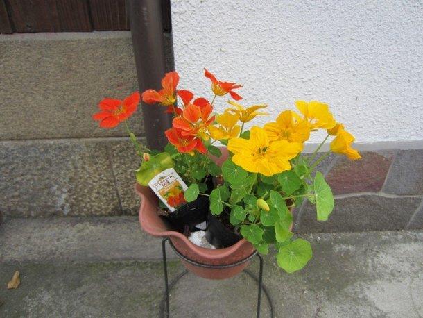 flowers japan 49