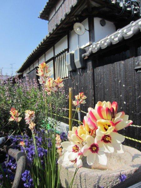 flowers japan 54