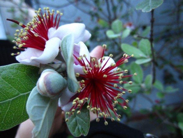 japanese flowers 7