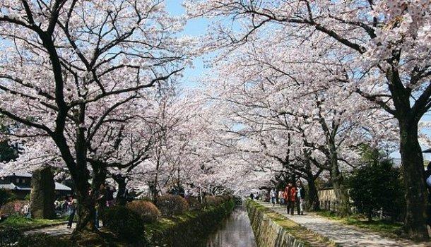 philosopher's path top 10 kyoto