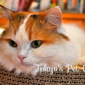 TOKYO PET CAFES - GUEST POST