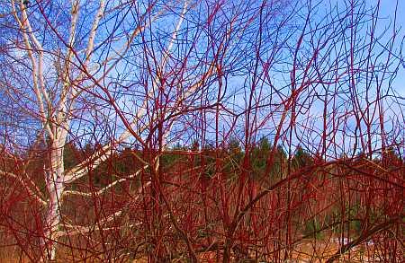 red-brush-small.jpg