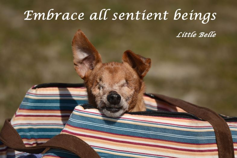 Embrace all sentient beings