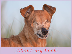 Belle About my Book