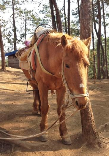 »Mein« Pferd