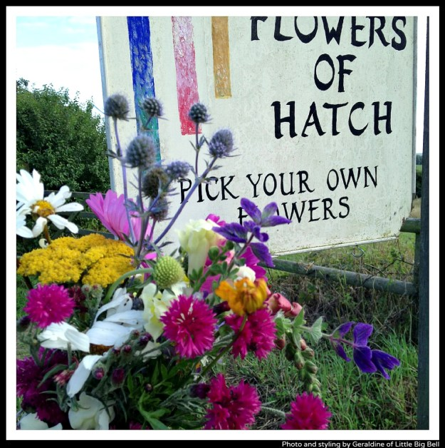 Flowers-of-Hatch-photo-by-Little-Big-Bell-blog