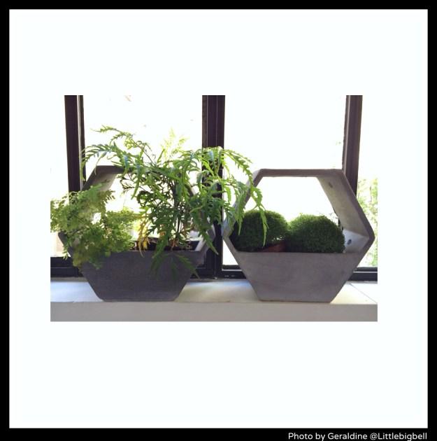 Merci-Paris-indoor-plants-photo-by-Little-Big-Bell