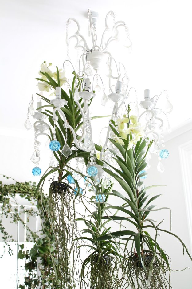 Orchids-on-chandelier-photo-by-Little-Big-Bell