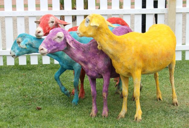 colourful-sheep-Gray-Malin