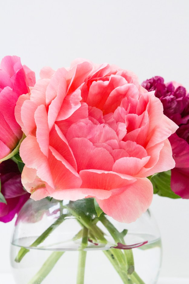 Sunset-peonies-pink-colour-Little-Big-Bell