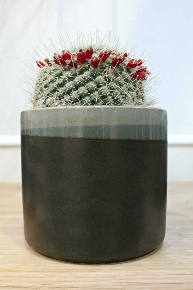 Cactus-in-planter-photo-by-Little-Big-Bell