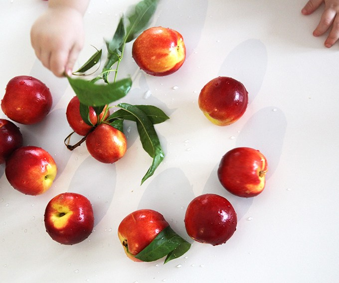 nectarine and mint puree for baby