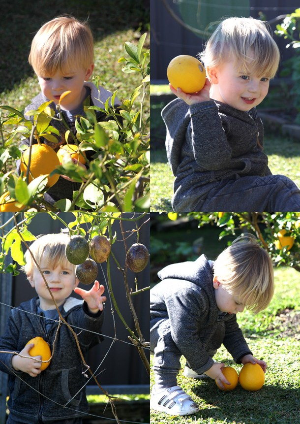 H picking lemons