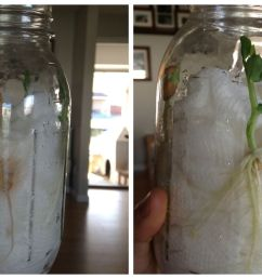 Seed Jar Science Experiment for Spring STEM Activities with Kids [ 1024 x 2048 Pixel ]