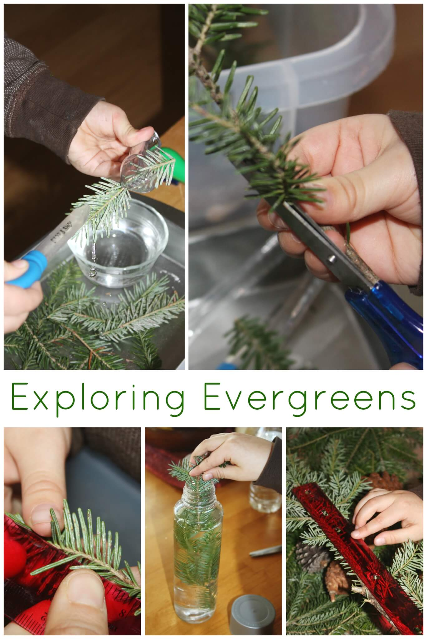 Evergreen Science Preschool Nature Science Exploration